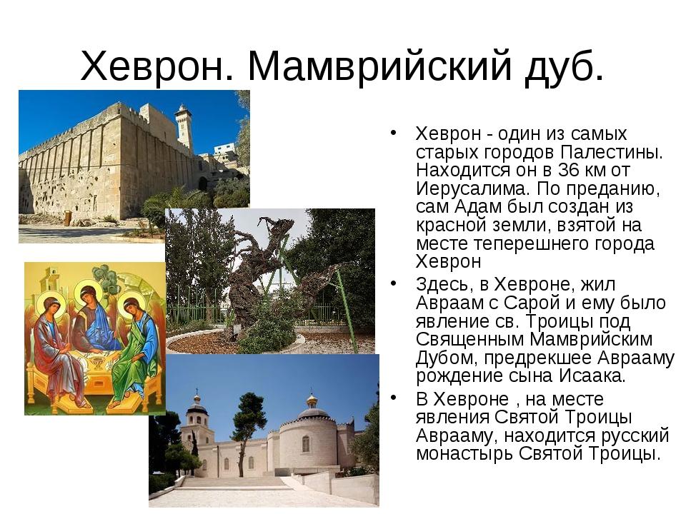 Хеврон. Мамврийский дуб. Хеврон - один из самых старых городов Палестины. Нах...