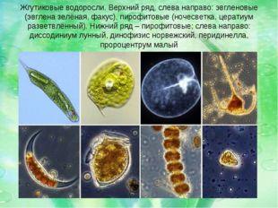 Жгутиковые водоросли. Верхний ряд, слева направо: эвгленовые (эвглена зелёная