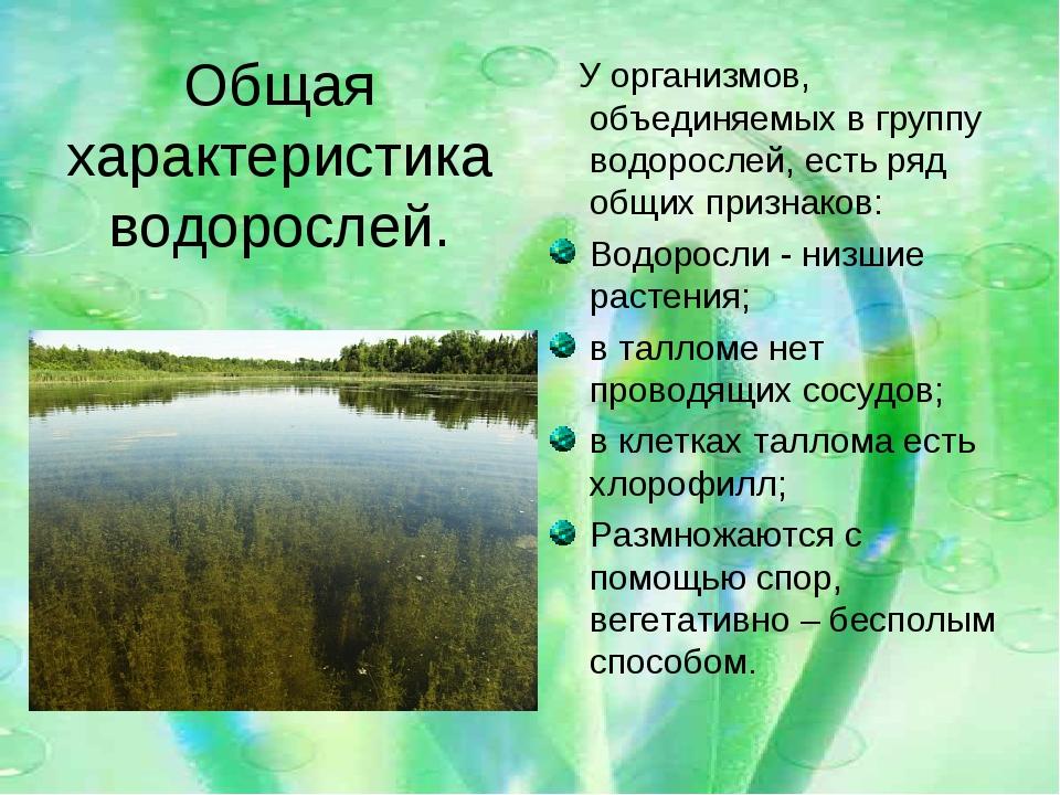 Общая характеристика водорослей. У организмов, объединяемых в группу водоросл...