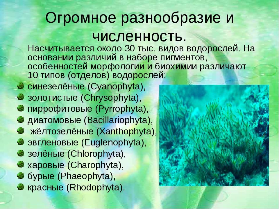Огромное разнообразие и численность. Насчитывается около 30 тыс. видов водоро...