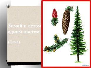 Зимой и летом одним цветом (Ёлка)