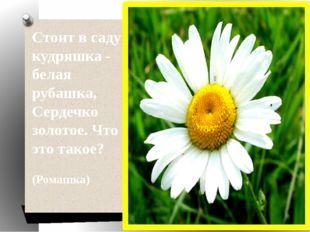 Стоит в саду кудряшка - белая рубашка, Сердечко золотое. Что это такое? (Ро