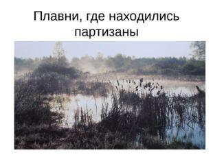 Плавни, где находились партизаны