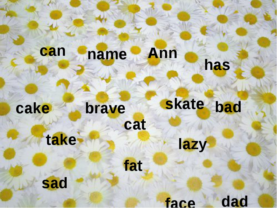 take cat dad cake sad face name skate brave lazy fat can Ann has bad