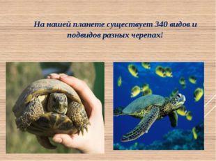 На нашей планете существует 340 видов и подвидов разных черепах!