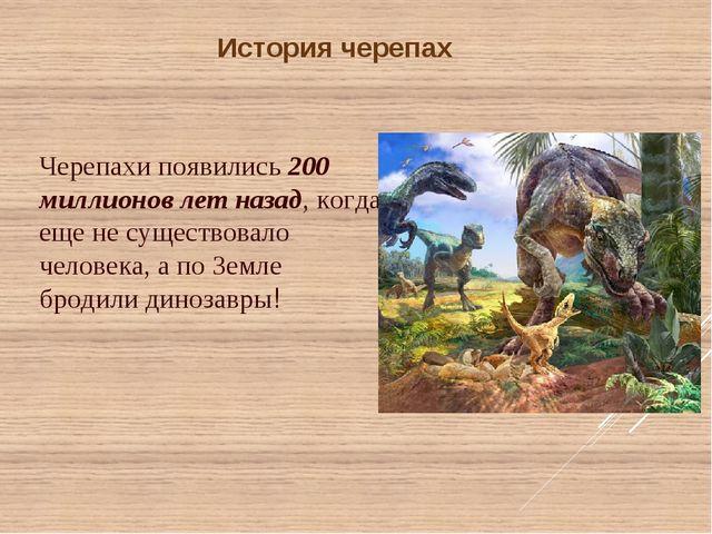 История черепах Черепахи появились 200 миллионов лет назад, когда еще не суще...