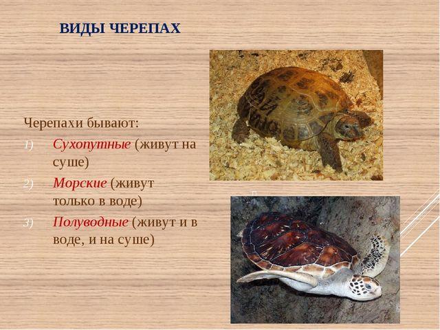 ВИДЫ ЧЕРЕПАХ Черепахи бывают: Сухопутные (живут на суше) Морские (живут тольк...