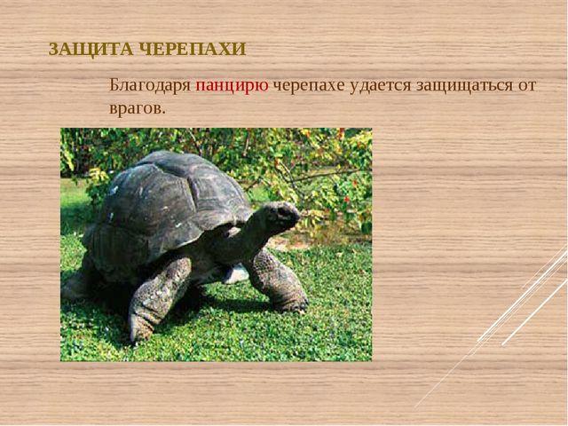 ЗАЩИТА ЧЕРЕПАХИ Благодаря панцирю черепахе удается защищаться от врагов.