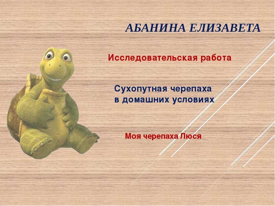АБАНИНА ЕЛИЗАВЕТА Моя черепаха Люся Сухопутная черепаха в домашних условиях И...