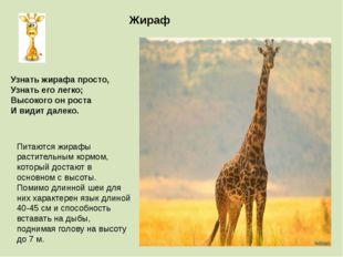 Жираф Питаются жирафы растительным кормом, который достают в основном с высот