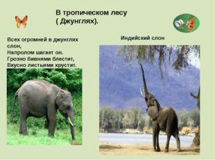 В тропическом лесу ( Джунглях). Индийский слон Всех огромней в джунглях слон,