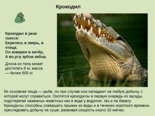 Крокодил Длина их тела может достигать 6 м, масса — более 600 кг. Их основная
