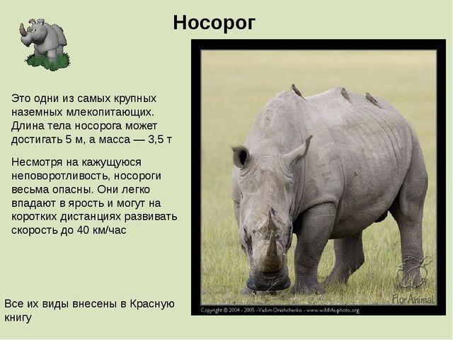 Носорог Несмотря на кажущуюся неповоротливость, носороги весьма опасны. Они л...