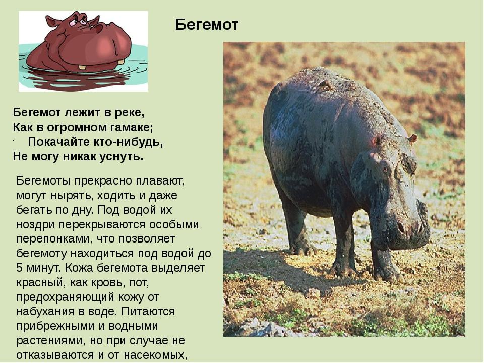 Бегемоты прекрасно плавают, могут нырять, ходить и даже бегать по дну. Под во...