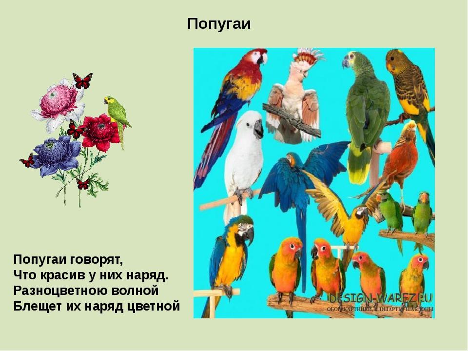 Попугаи Попугаи говорят, Что красив у них наряд. Разноцветною волной Блещет и...