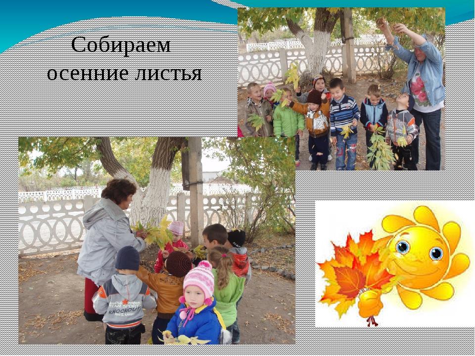 Собираем осенние листья