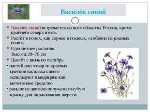 Василёк синий Василёк синий встречается во всех областях России, кроме крайне