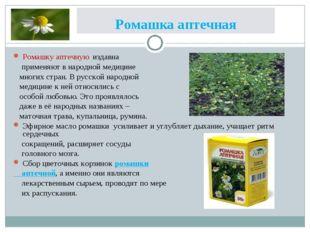 Ромашка аптечная Ромашку аптечную издавна применяют в народной медицине многи