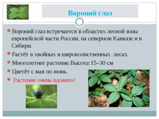 Вороний глаз Вороний глаз встречается в областях лесной зоны европейской част