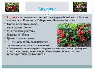 Брусника Брусника встречается в лесной зоне европейской части России, на севе