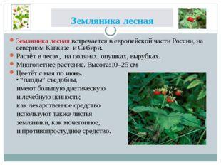 Земляника лесная Земляника лесная встречается в европейской части России, на