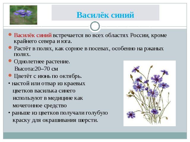 Василёк синий Василёк синий встречается во всех областях России, кроме крайне...