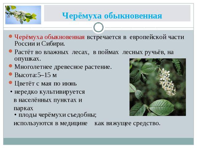 Черёмуха обыкновенная Черёмуха обыкновенная встречается в европейской части...