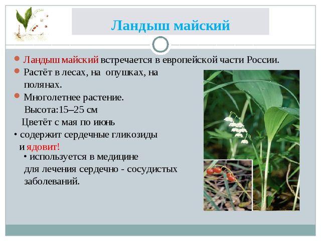 Ландыш майский Ландыш майский встречается в европейской части России. Растёт...