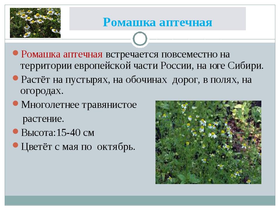 Ромашка аптечная Ромашка аптечная встречается повсеместно на территории европ...