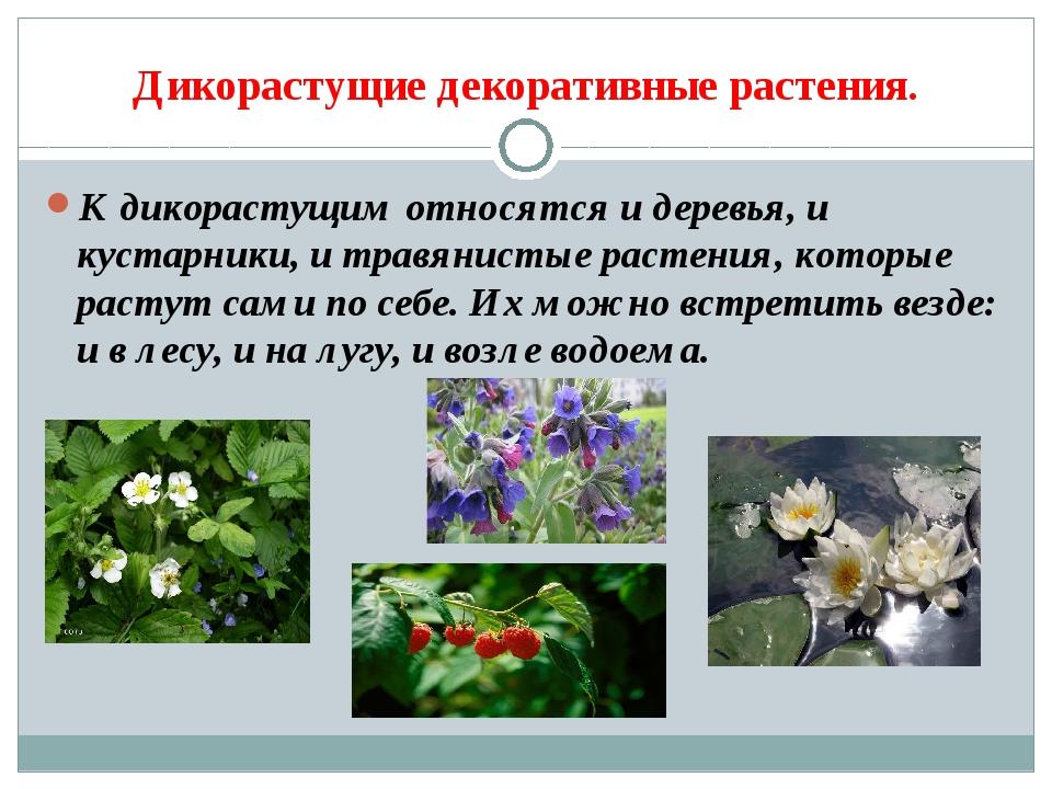 Дикорастущие декоративные растения. К дикорастущим относятся и деревья, и кус...
