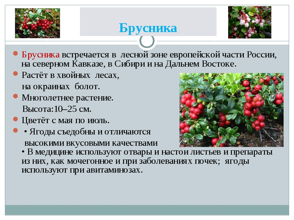 Брусника Брусника встречается в лесной зоне европейской части России, на севе...