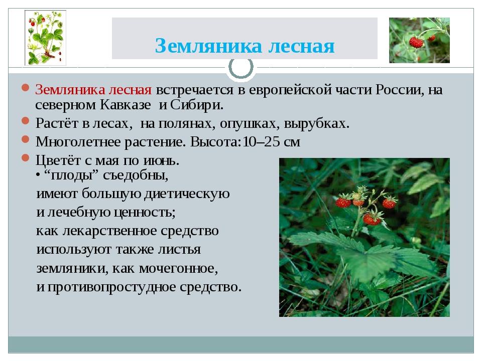 Земляника лесная Земляника лесная встречается в европейской части России, на...