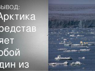ВЫВОД: Арктика представляет собой один из последних просторов дикой природы н