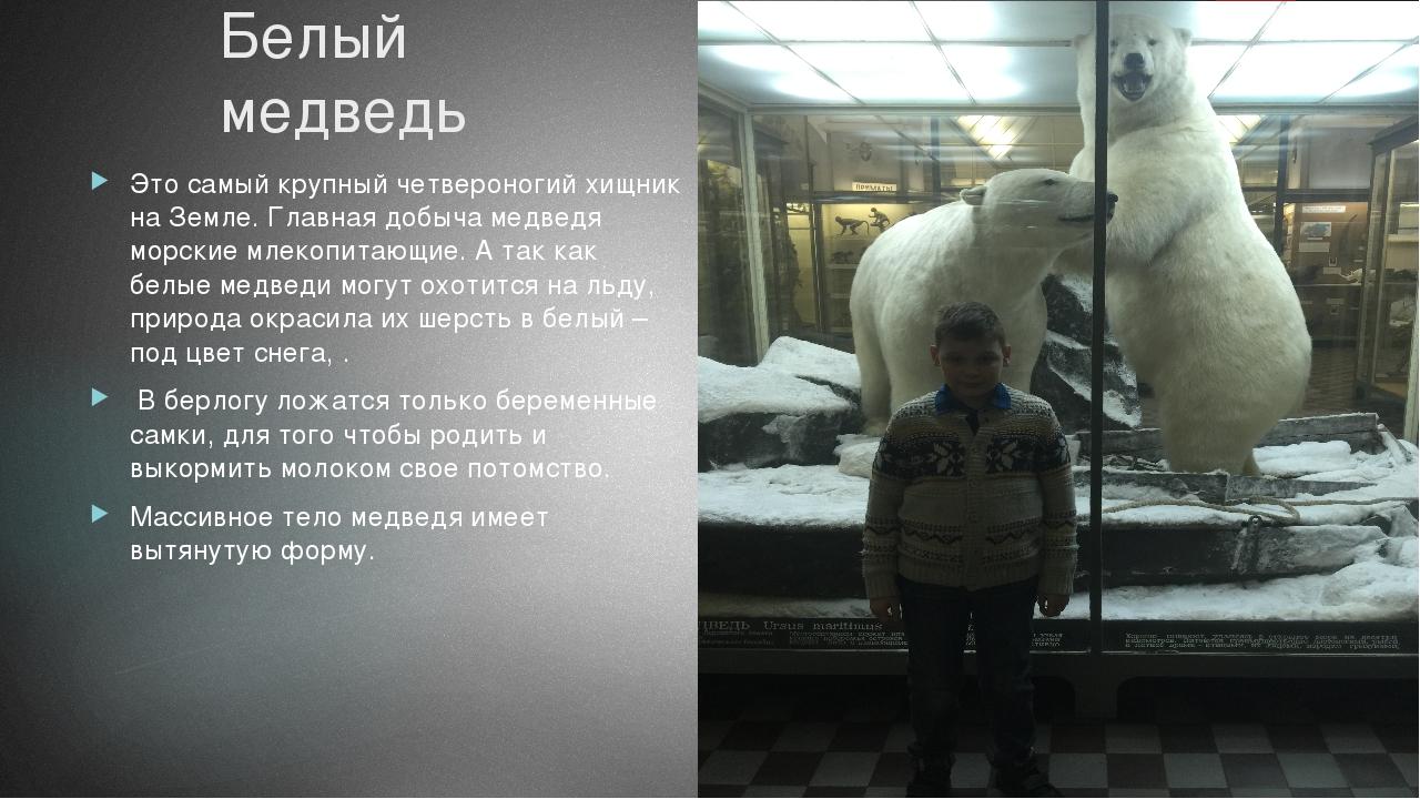 Белый медведь Это самый крупный четвероногий хищник на Земле. Главная добыча...