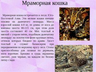 Мраморная кошка Мраморная кошка встречается в лесах Юго-Восточной Азии. Эти м