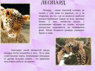 ЛЕОПАРД Леопард - очень опытный охотник не только у себя дома на деревьях, но