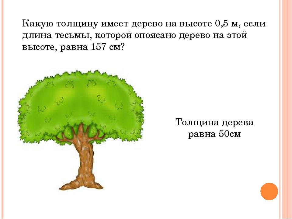 Какую толщину имеет дерево на высоте 0,5 м, если длина тесьмы, которой опояса...