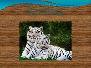 Бенгальский тигр обитает в Северной и Центральной Индии, в Непале и Бангладеш.