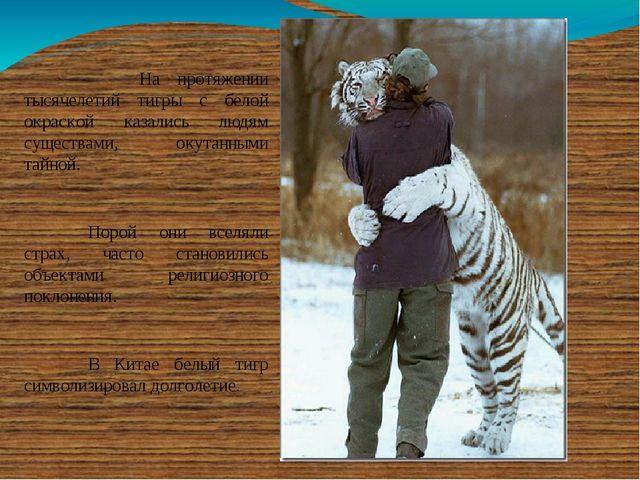 На протяжении тысячелетий тигры с белой окраской казались людям существами...
