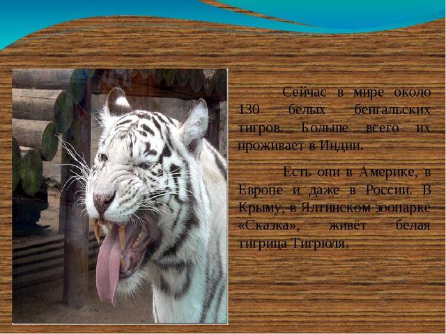 Сейчас в мире около 130 белых бенгальских тигров. Больше всего их проживает...