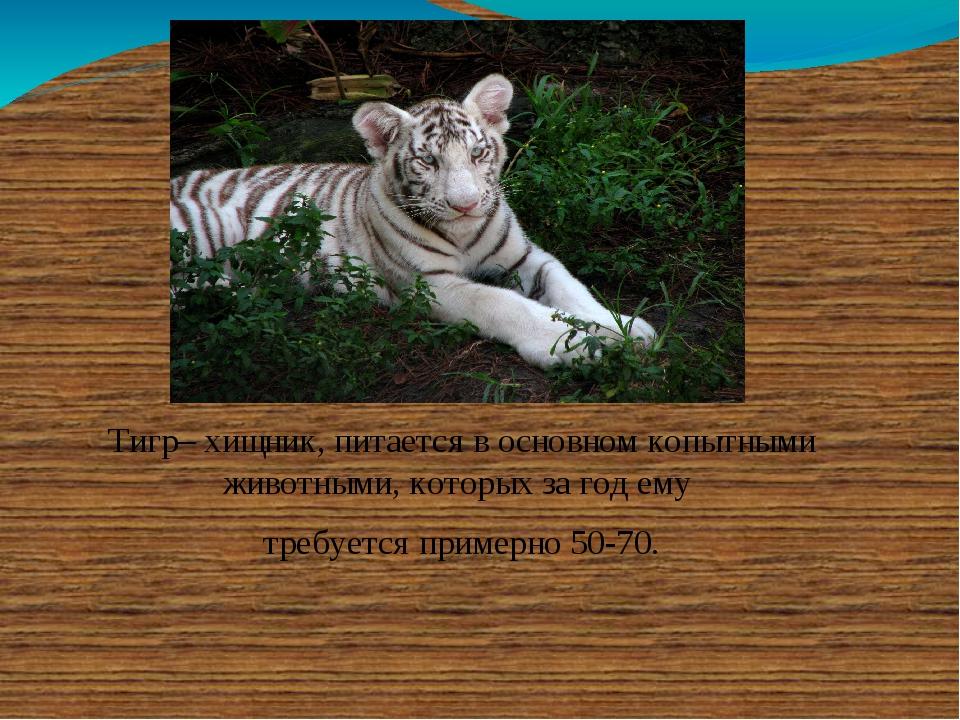 Тигр– хищник, питается в основном копытными животными, которых за год ему тре...