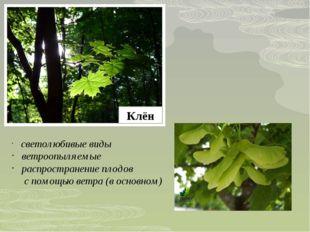 Клён светолюбивые виды ветроопыляемые распространение плодов с помощью ветра