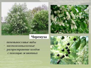 Черемуха теневыносливые виды насекомоопыляемые распространение плодов с помощ