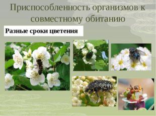 Приспособленность организмов к совместному обитанию Разные сроки цветения