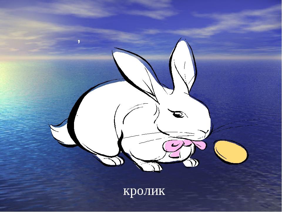 , кролик
