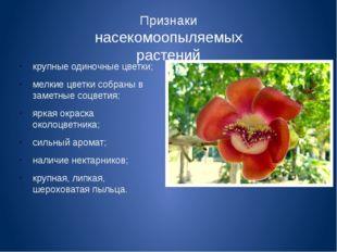 Признаки насекомоопыляемых растений крупные одиночные цветки; мелкие цветки с