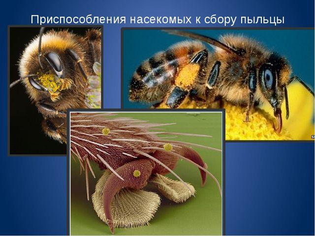 Приспособления насекомых к сбору пыльцы