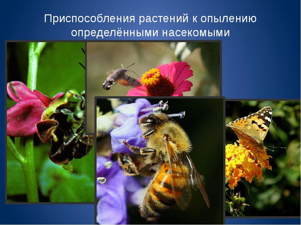 Приспособления растений к опылению определёнными насекомыми