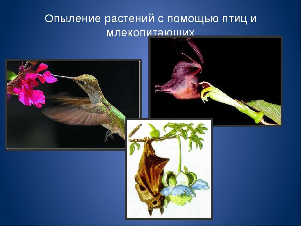 Опыление растений с помощью птиц и млекопитающих