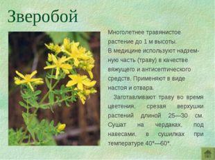 Многолетнее травянистое растение до 1 м высоты. В медицине используют надзем-